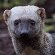 Tayto Park Animal - Tayra