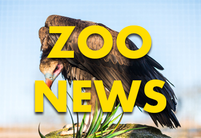 May Zoo News