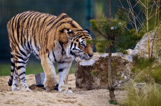 Gallery: Animals at Tayto Park